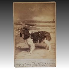 "Antique Cabinet Dog Photo ~ Spaniel Named ""Kappa"""