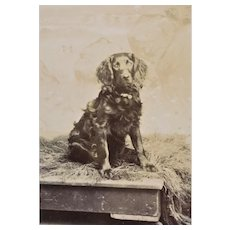 Antique CDV Photo ~ Curly Haired Dog