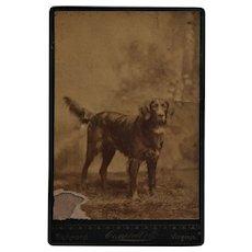Antique Cabinet Photo ~ Retriever Dog