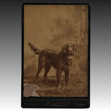 Antique Cabinet Photo ~ Retriever Dog