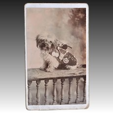 "Antique Cdv ~ Mascot Dog ""PomPom"" Middlesex Regiment"