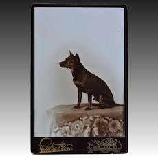 Antique Cabinet Photo ~ Manchester Terrier Dog