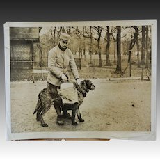 WW1 French War Dog Photograph ~ Delivering Food In No-Man's Land France