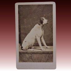 Antique CDV Photograph ~ Lovely Hound Dog
