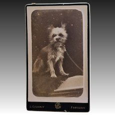 Antique CDV Photograph ~ Fuzzy Terrier Dog