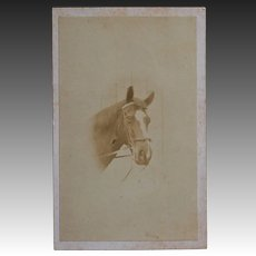 Antique CDV Photo ~ Horse Portrait