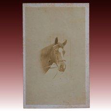 Antique CDV Photo ~ Horse Portrait