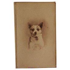 Victorian CDV Photo ~ Terrier Dog Portrait