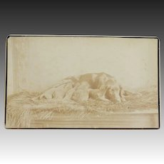Antique CDV Photograph ~ Mother Dog With Pups