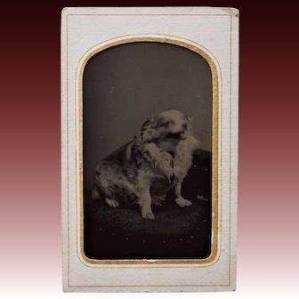 C1887 Antique Tintype Photograph ~ Posing Dog