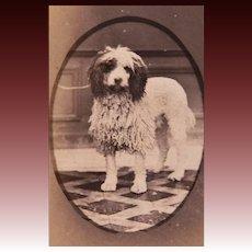 Antique French CDV Photograph ~ Shaggy Dog