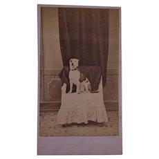 Antique French CDV Photo ~ Cute Dog