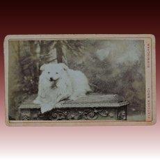 Antique CDV Photograph ~ Spitz Dog