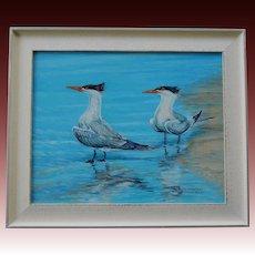 Crested Terns On Manasota Beach Oil Painting