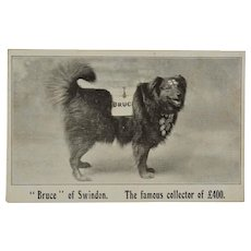 Antique Postcard ~ Bruce Of Swindon, Famous Collecting For Charity Dog #3