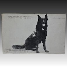 French WW1 Red Cross Dog Postcard ~ Belgian Shepherd