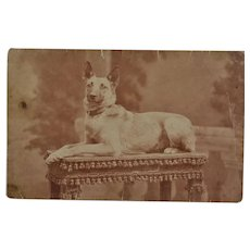C1913 Antique French RPPC Postcard ~ Shepherd Dog