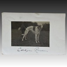 "Antique RPPC Dog Postcard ~ Borzoi Named ""Cardigan Ransom"""