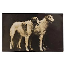 Antique RPPC Dog Postcard ~ Borzoi Russian Wolfhound Pair
