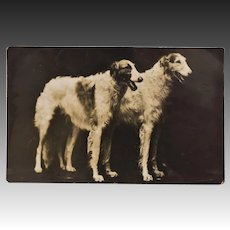 Antique RPPC Dog Postcard ~ Borzoi Russian Wolfhound Pair