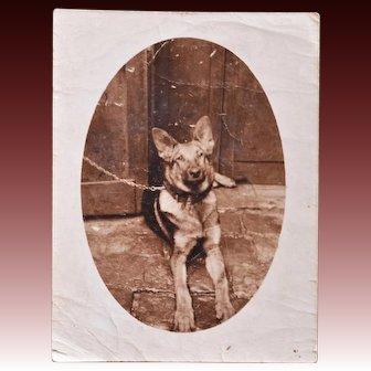 "Antique French RPPC Dog Postcard ~ German Shepherd Named ""Prince"""