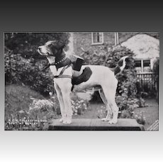 "Antique RPPC Postcard ~ ""Spot"" Collection Dog"
