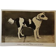 """Bob"" Daily Mirror Gugnunc Collar For Brave Dogs Postcard"