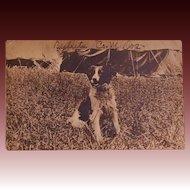 "US Infantry Mascot Postcard ~ ""Bullets Co. M. Dog"""