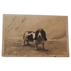 C1904 Antique French RPPC Postcard ~ Basset Hound Dog