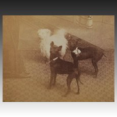 Antique Cabinet Photograph ~ Three Dogs