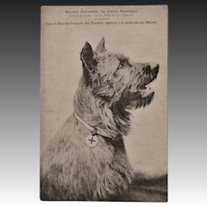 French WW1 Red Cross Dog Postcard