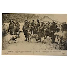 French WW1 Postcard ~ Ambulance/Red Cross Dogs - Red Tag Sale Item