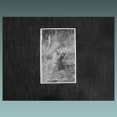 Photo Postcard  Bear