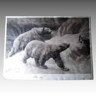 "Signed ""Herbert Dicksee (1862-1942)"" Etching of Polar Bears"
