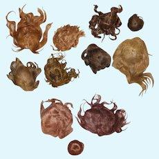 11 Antique Brown Human Hair & Mohair Bisque Doll Wigs!