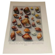 Shells of Philippine Tree Snails Color Plate