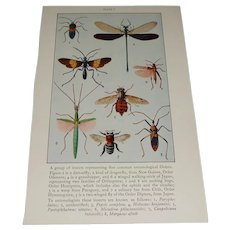 Color Plate  Insects 5 Entomological Orders