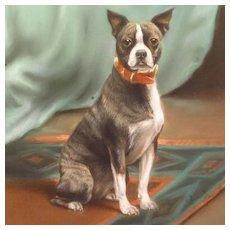 Antique Boston Terrier Dog Portrait Painting