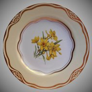 Daffodil Dinner Plate Flowers Of The First Ladies Martha Washington
