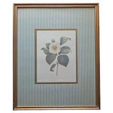 ca 1990 Print Framed White Camellia Teal Stripes Gold Wood Vintage 21 x 17