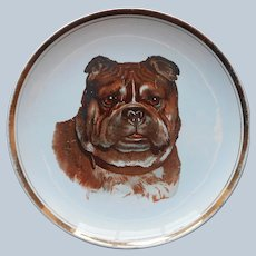 Antique Pug Dog Cabinet Plate Sevres China Company Ohio