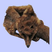1920's - 1930's Fox Stole/Wrap