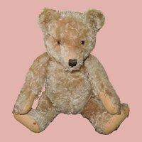 """20"""" 1950's Steiff Curly Mohair Teddy Bear, """"Amanda"""""""