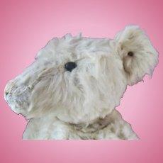 "Antique Steiff White 23"" Teddy Bear with Steiff Button & Shoe Button Eyes"