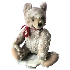 "Fabulous Vintage 1950s Large 20"" Steiff Teddy Bear"