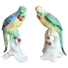 Pr. Perched  Parrots By Chelsea House