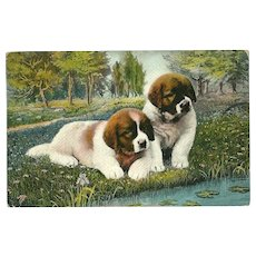Vintage Postcard of Two Saint Bernard Puppies