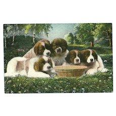Vintage Postcard of Five Saint Bernard Puppies