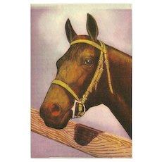 Vintage Postcard of Brown Horse Facing Left - 1 of 2