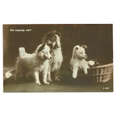 Real Photo Postcard of Three Puppies